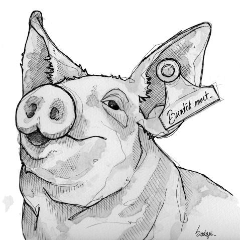 Cochon bientot mort
